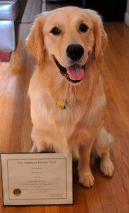 Canine Good Citizen Class Cpt Eugene