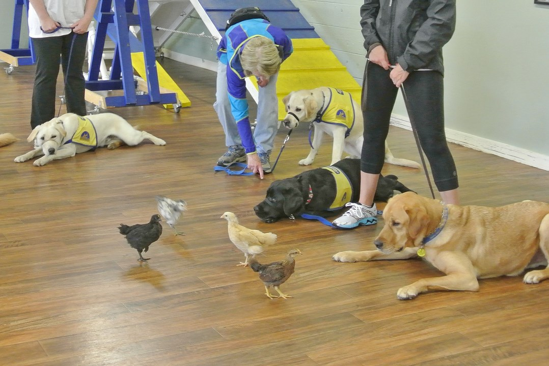 Dog Training Certification Classes