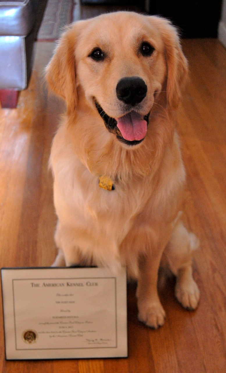 Canine good citizen class pet training cpt training duke proudly displays his cgc diploma 1betcityfo Image collections