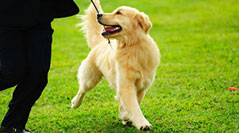 Dog training classes in atlanta ga