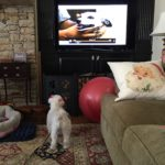 Behavior Modification- Barking at the television