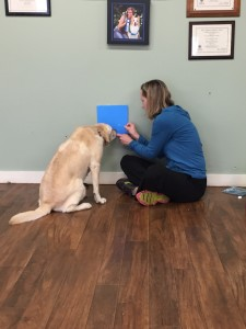 CPT Trainer and Project Volunteer Patricia King teaches Kady the Experiment 9 Stage One olfaction protocols.
