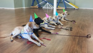 Celebrating Luther's 1st birthday during the CCI Puppy Raiser Class.