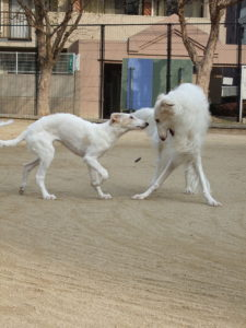 Canine Play Styles- Status Hierarchies