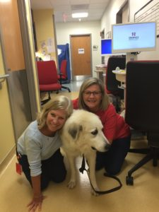 Clarice the Great Pyrenees Therapy Dog