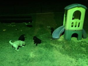 Puppies- The play yard includes many toys and objects for sensory stimulation and environmental conditioning.