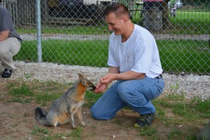 Mark using positive reinforcement to train the fox to sit.