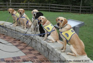 CPT Trainer Patricia King leads the CCI Puppy Raiser Class in an outdoor sit-stay at Morgan Falls Park.