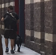 An off-leash Pit Bull dog walking alongside its owner. I don't know whether the man or dog met all the regulatory requirements. Yet, both appeared safe and well-behaved.