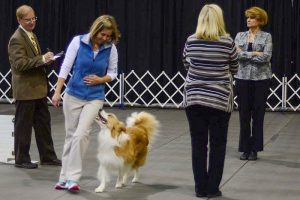 Karen Smalley: Karen Smalley and Bodhi performing Open off-leash Figure-8 heeling. Photo courtesy of L. A. Freed.
