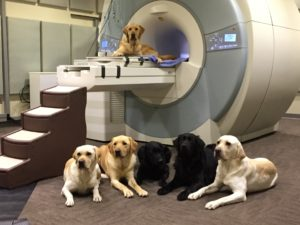 canine fMRI-The dogs scanned during the Saturday, January 16 session.