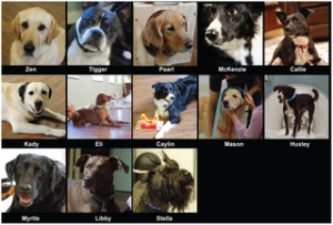 Mark Spivak, Greg Berns, fMRI, Dogs, The Dog Project, CPT