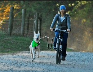 The Springer is an attachment that allows you to cycle your dog safely. Bicycling early in the morning, especially on a soft surface, is an excellent high-intensity exercise.