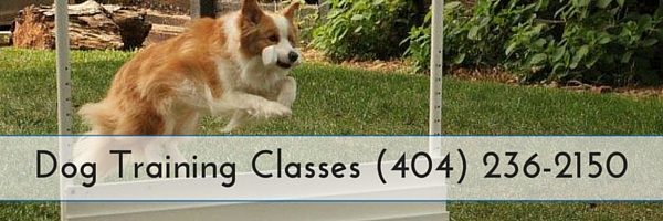 Dog Training Classes in Peachtree Corners GA