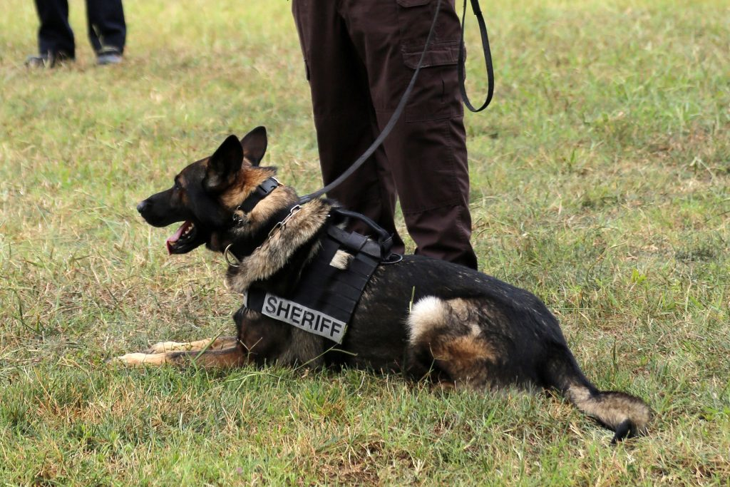 Cpt S Mark Spivak Completes Legal Course On Police K9 Searches Cpt