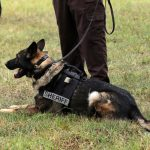 K9- Expert Witness- Motion to Suppress