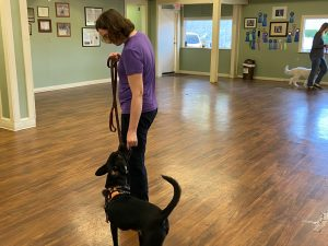 Dog Anxiety Owner Anxiety Dog Behavior Modification